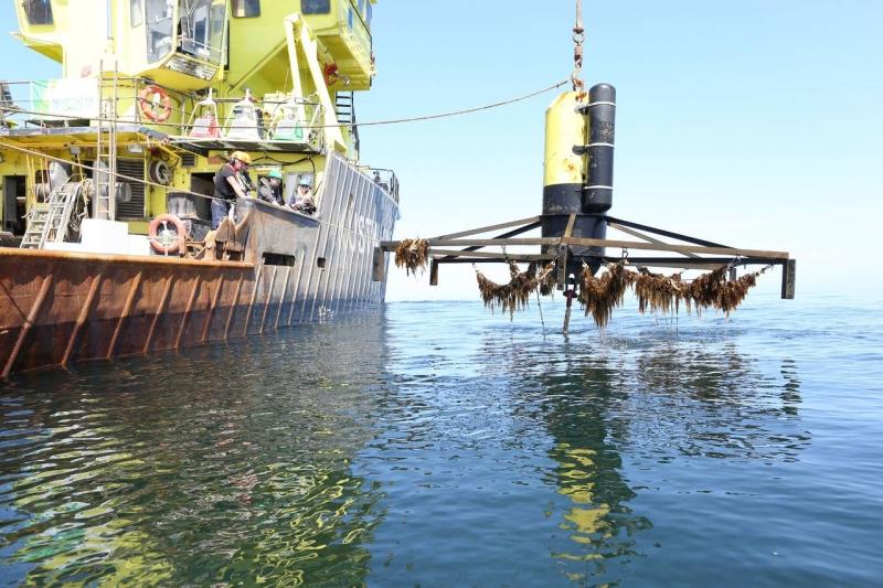 Koen van Swam – General manager Noordzeeboerderij en het Zeewierplatform